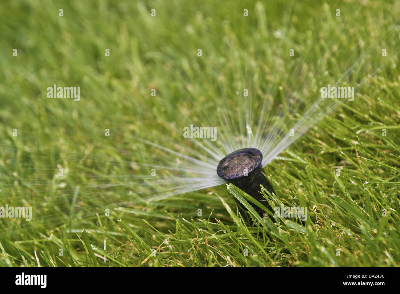 Water sprinkler in the grass, close up image with selective focus. - Stock Image