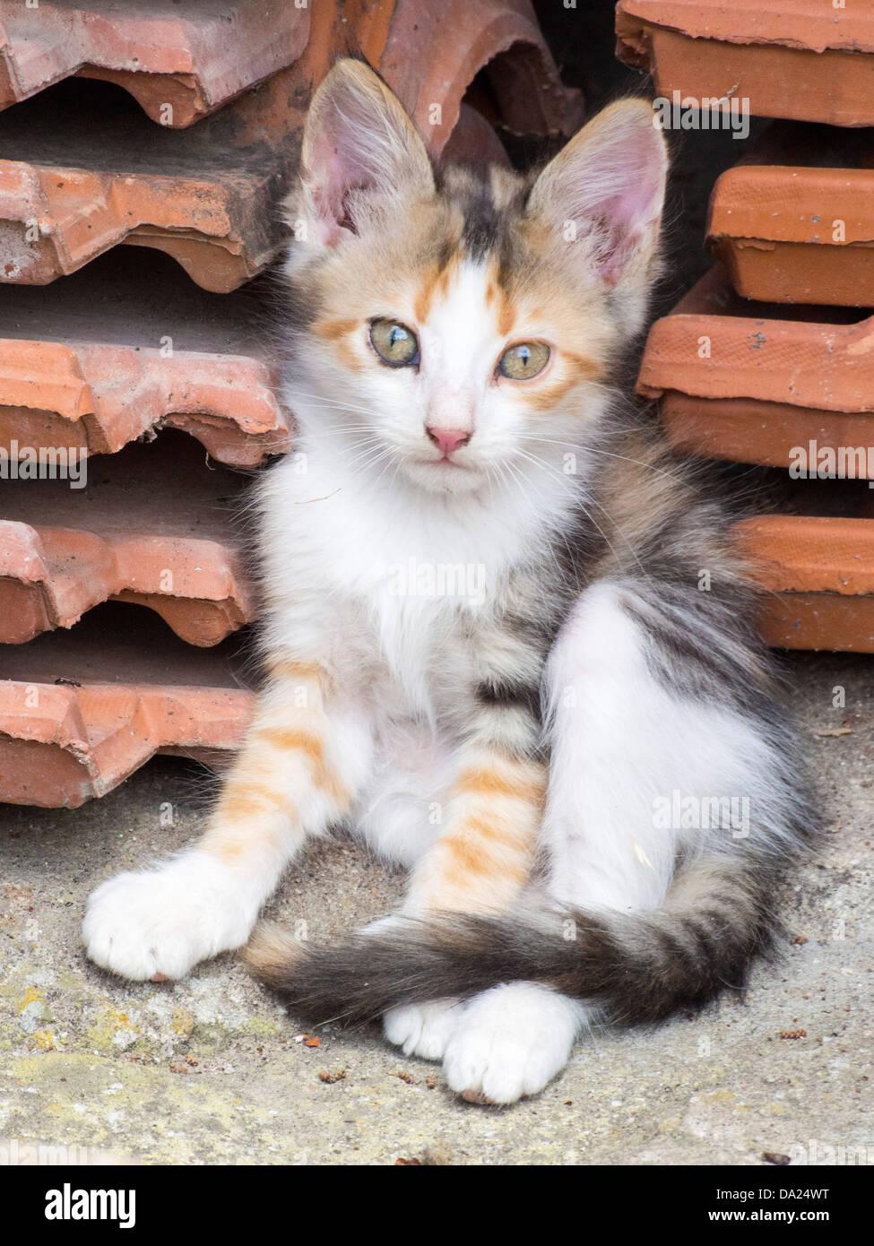 A feral kitten on Lesvos, Greece, - Stock Image