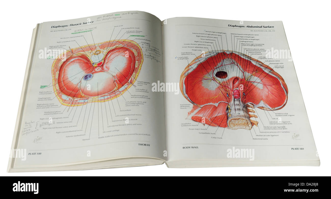 Atlas Of Human Anatomy By Frank Netter Stock Photo 57828352 Alamy