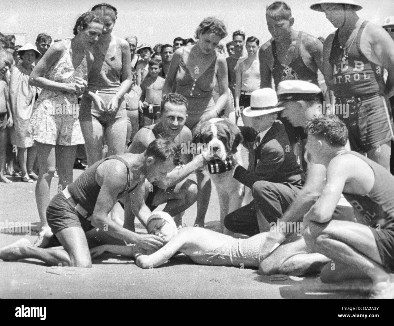 A St. Bernard 'rescuing' a passed out bather on the beach in Atlantic City, NJ circa 1935 - Stock Image