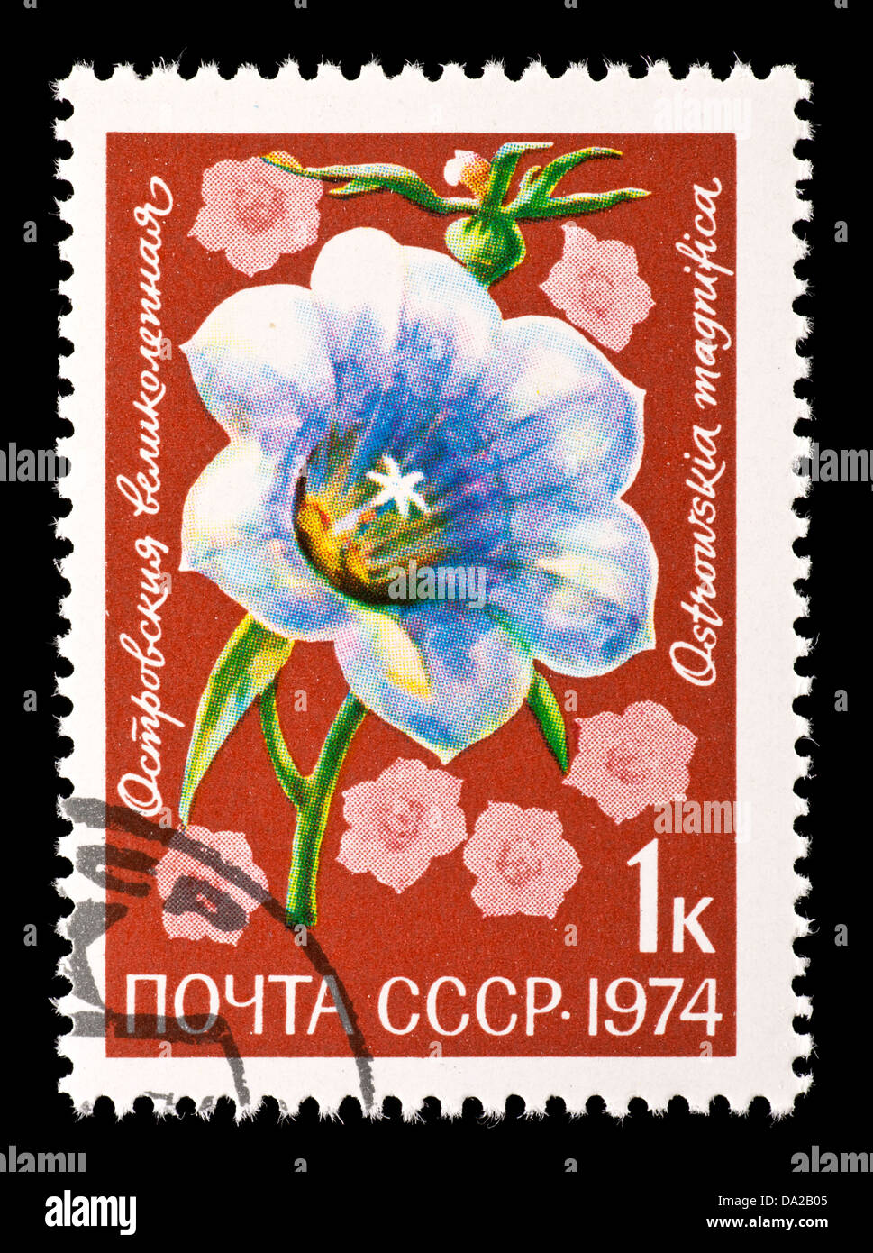 Postage stamp from the Soviet Union depicting morning glories. - Stock Image