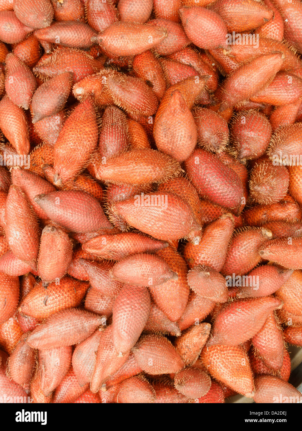 Salak, tropical sweet fruit in thai local market. The scientific name : Salacca zalacca is a species of palm tree. - Stock Image