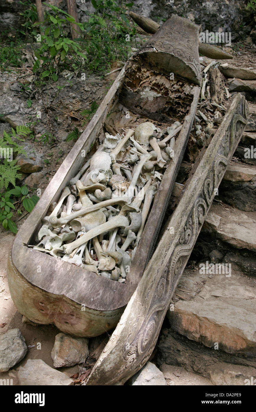 Old Carved Wooden Coffin Full Of Skulls And Bones At Torajan Cemetery Stock Photo Alamy