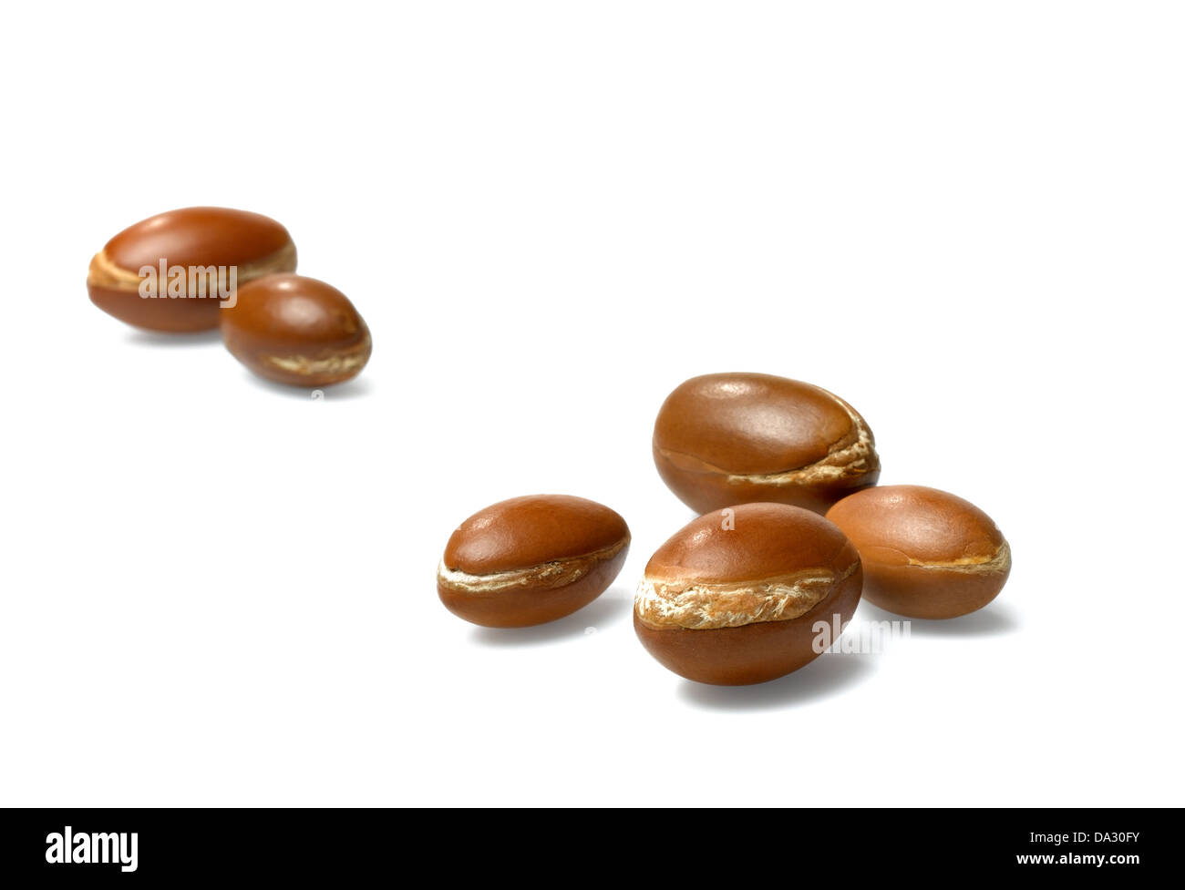 argan nuts - Stock Image