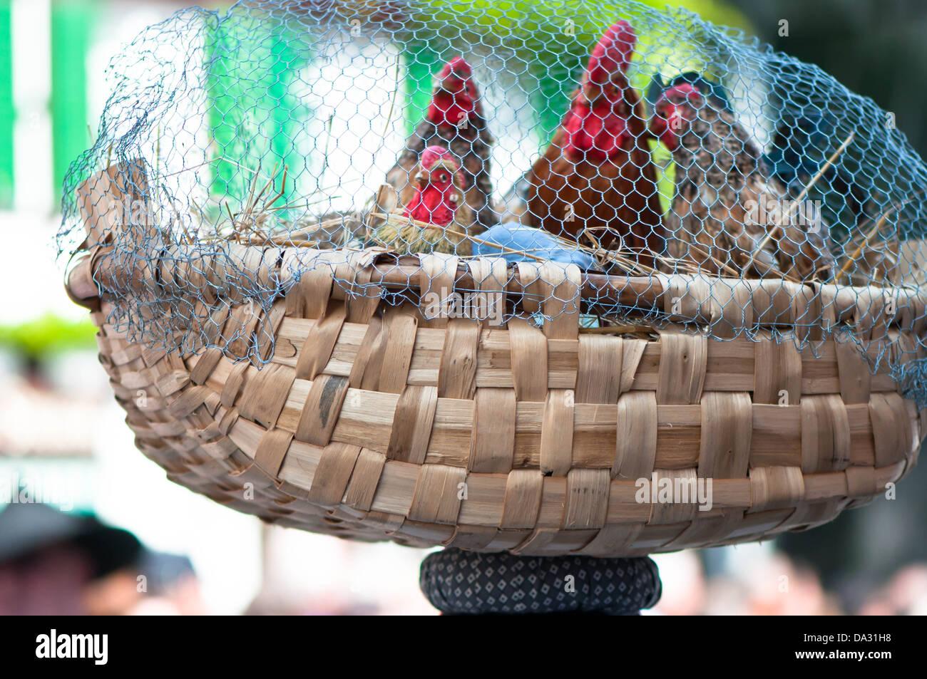 Hühnerstall, Käfig, penned, Schlachthof, Tier, mistreatment, Vegetarisches Gericht, Vogel, Landwirtschaft, - Stock Image