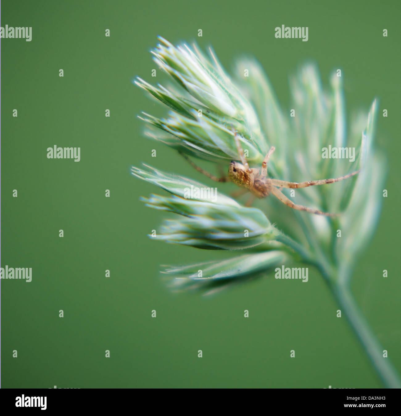 Spiders hiding - Stock Image