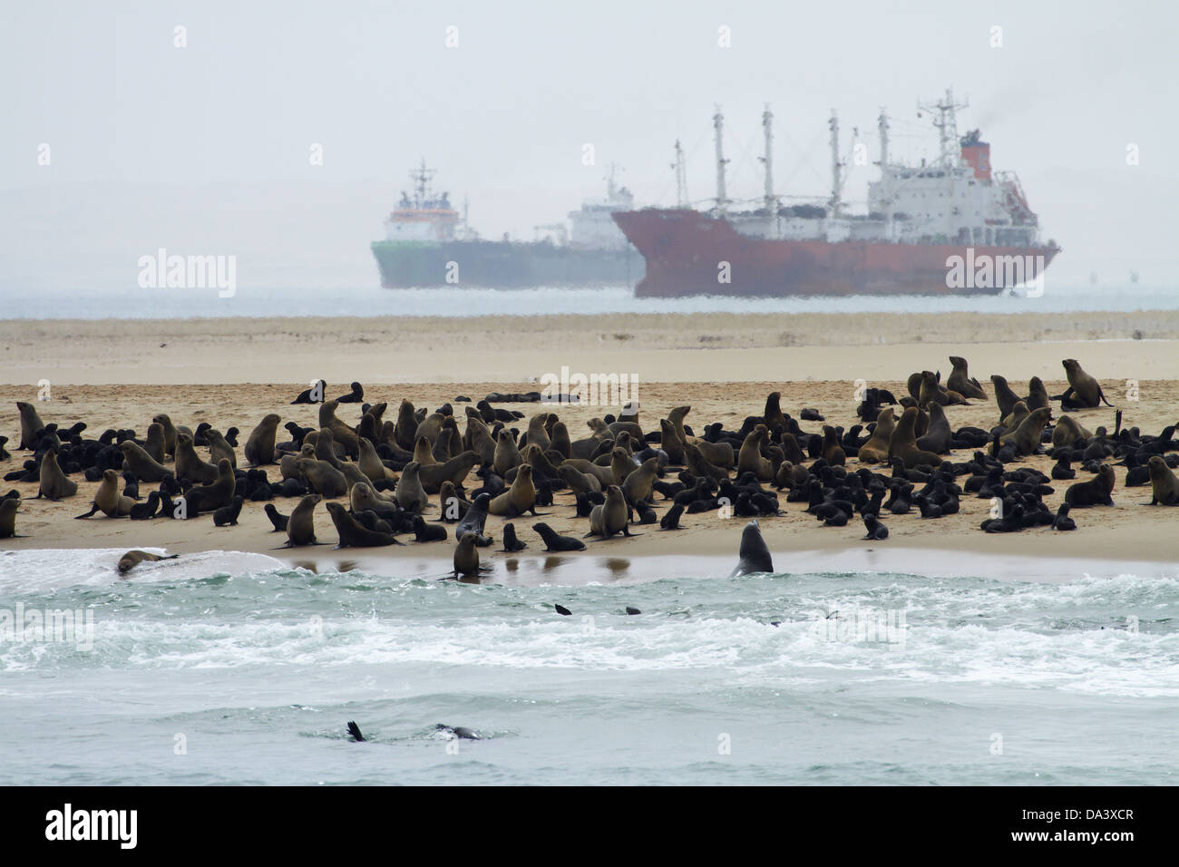 Cape Fur Seal colony (Arctocephalus pusillus) at Pelican Point, and ships anchored in Walvis Bay, Namibia, Africa - Stock Image