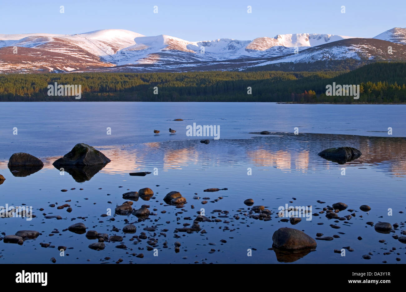 Cairngorm and the Northern Corries seen from Loch Morlich near Aviemore, winter evening, Cairngorms National Park, Stock Photo