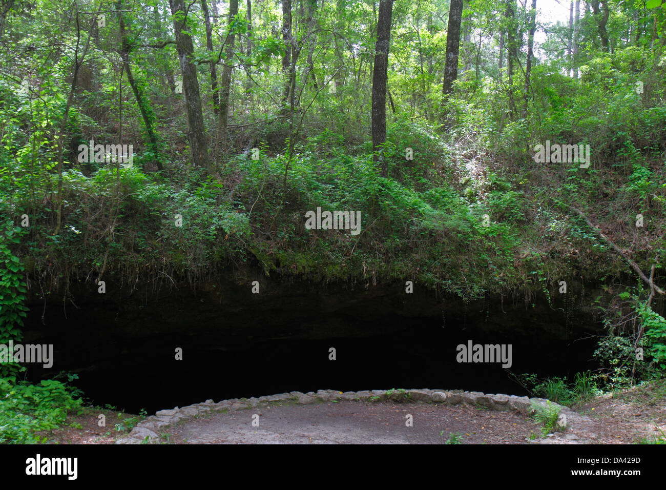 Tallahassee Florida Apalachicola National Forest Leon Sinks sinkhole Big Dismal Sink Woodville Karst Plain - Stock Image