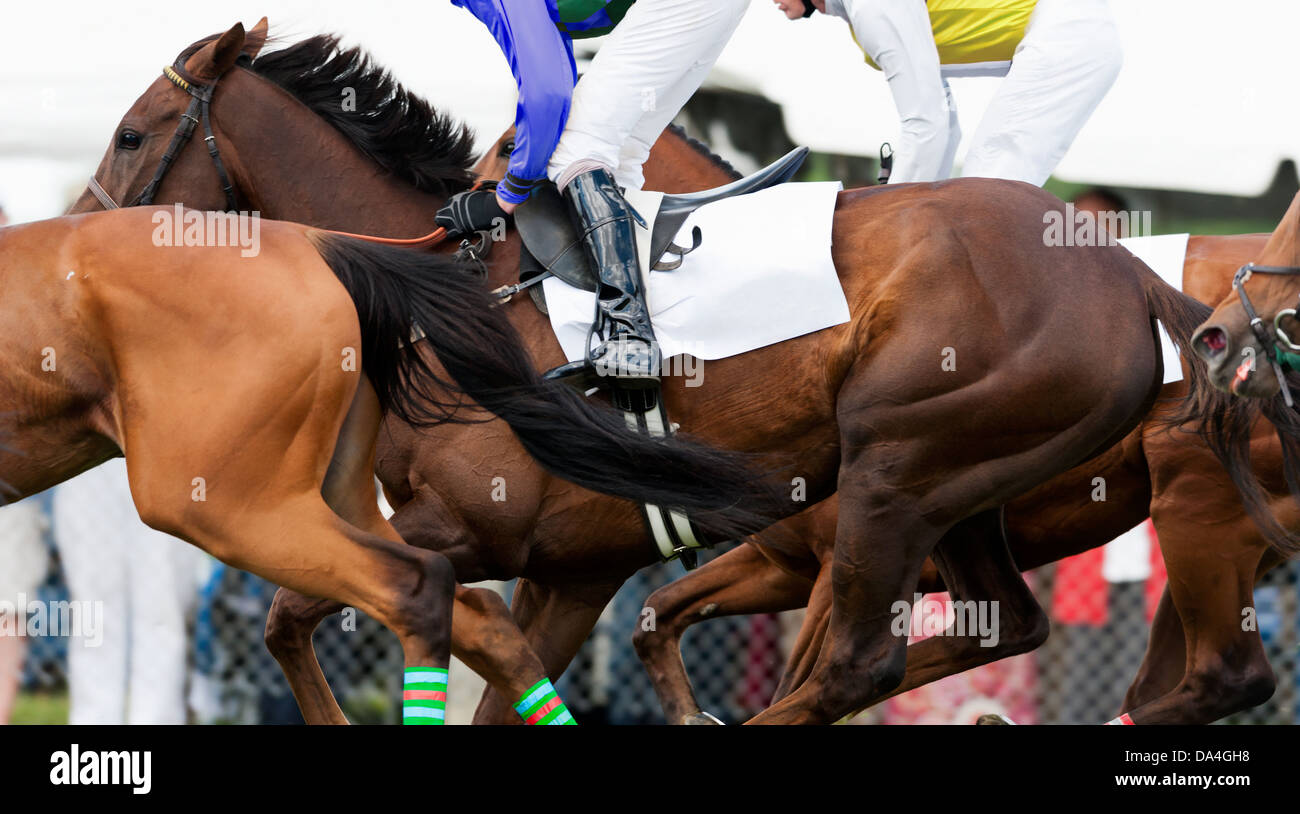 Close-up of group of Race horses running during a steeplechase race Stock Photo