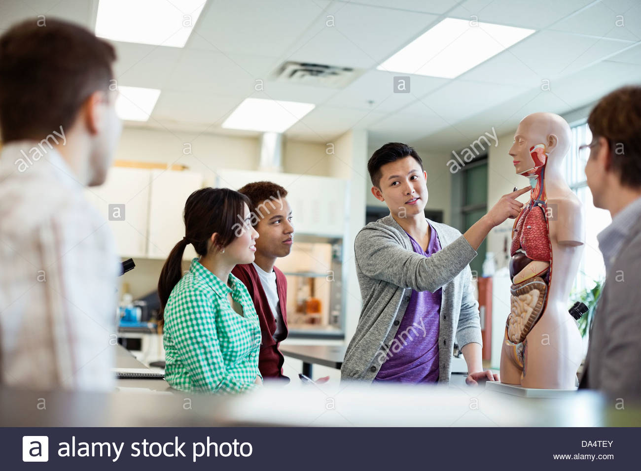 Students learning anatomy in college science lab - Stock Image