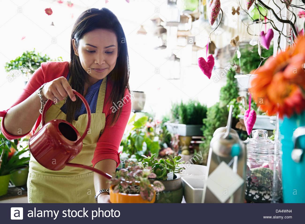 Female florist watering plants in flower shop - Stock Image