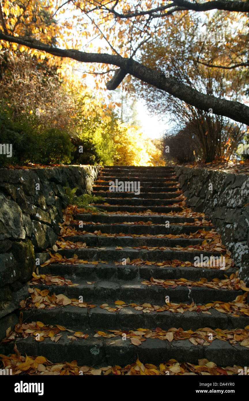 Stone steps covered with autumn leaves leading up to a path of bright sunlight in a garden. - Stock Image