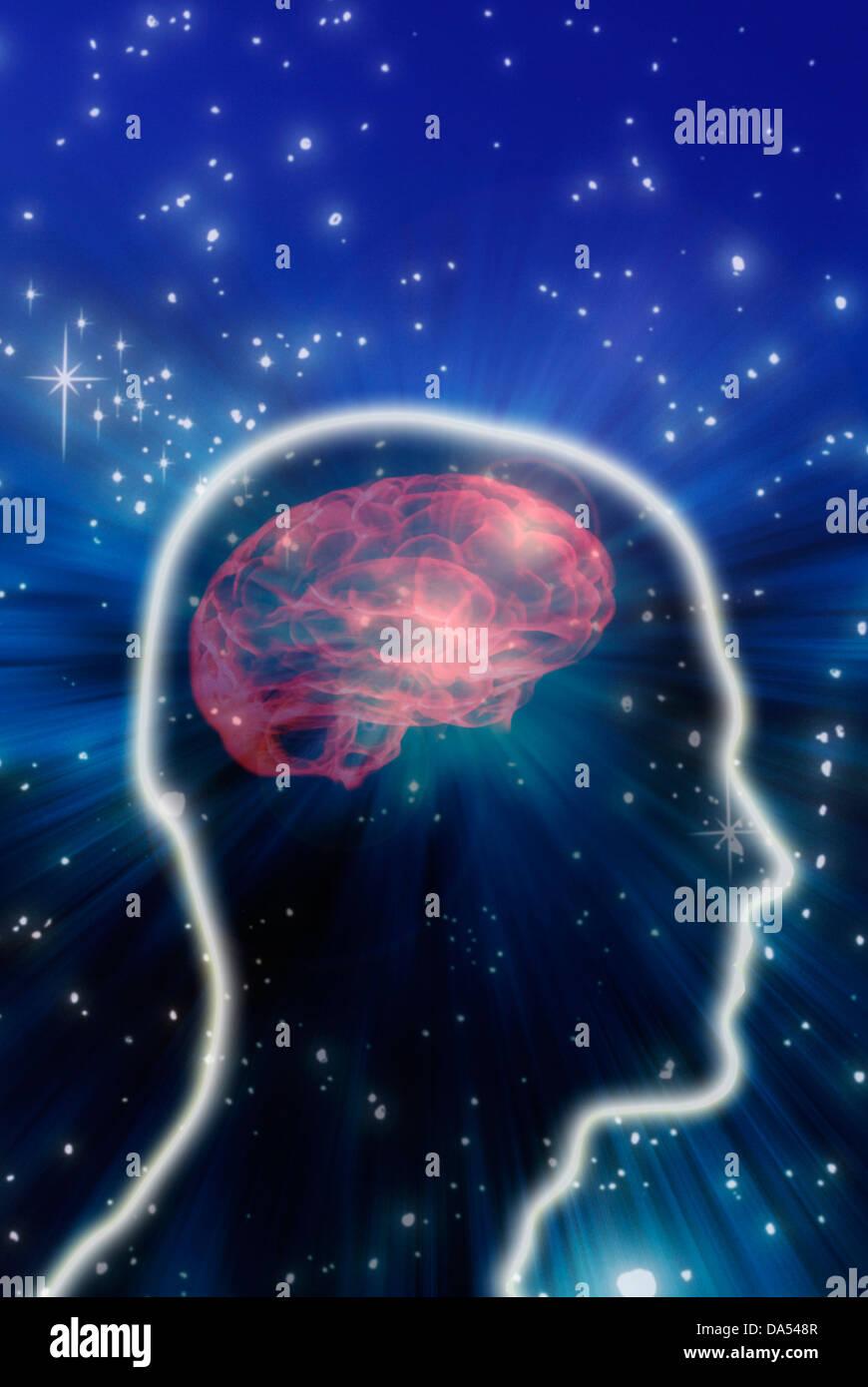 man head shape with brain seen through - Stock Image
