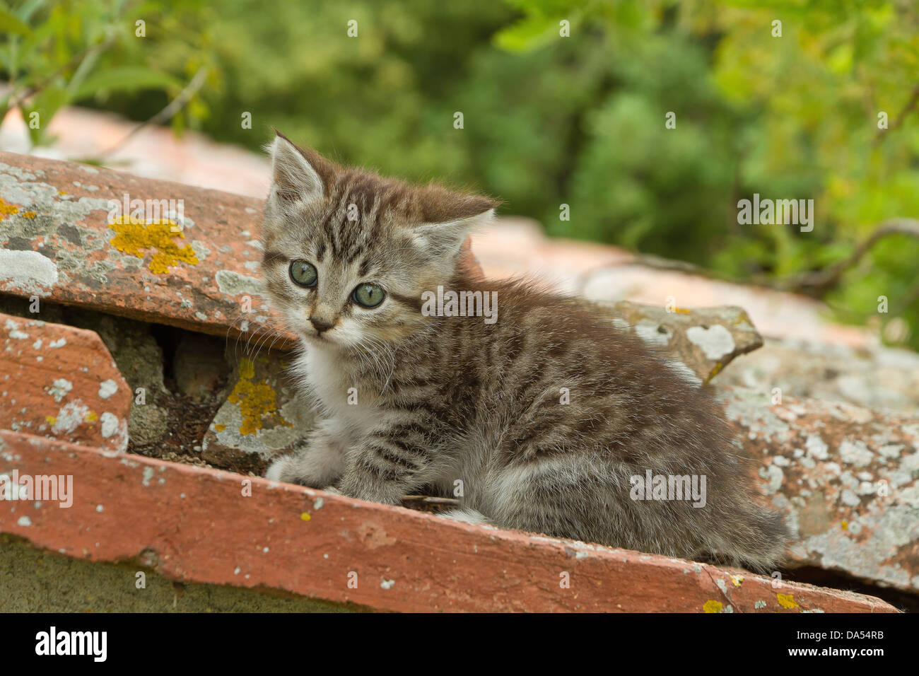 Animal, cat, kitten, young, garden, domestic animal, pet, - Stock Image