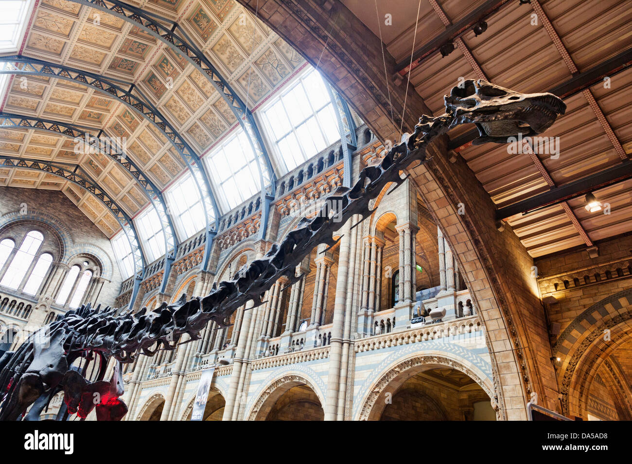 England, London, Kensington, Natural History Museum, Dinosaur - Stock Image