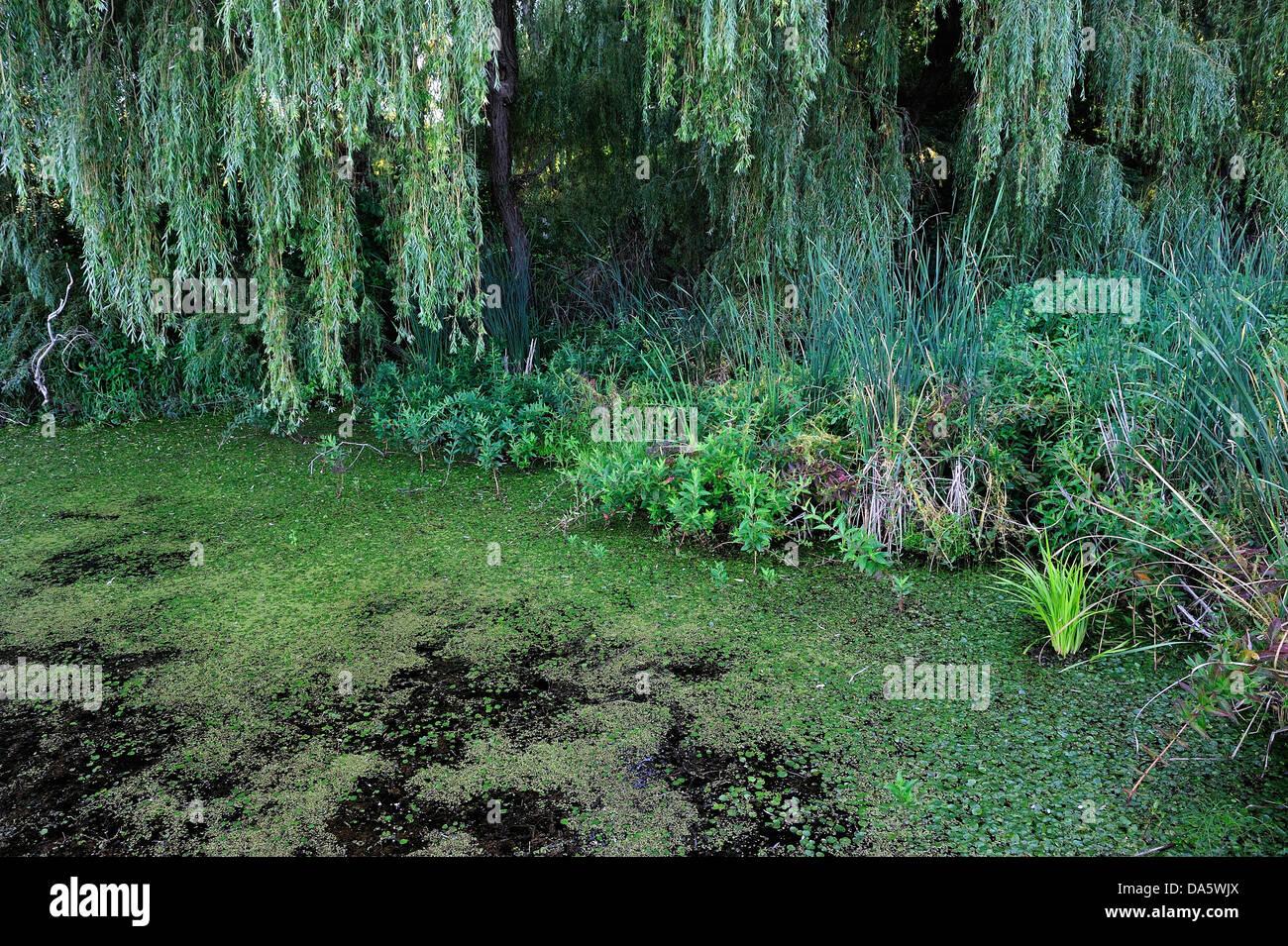 Marshland, marsh, swamp, Sanctuary Pond, Point Pelee, National Park, Leamington, Ontario, Canada, - Stock Image