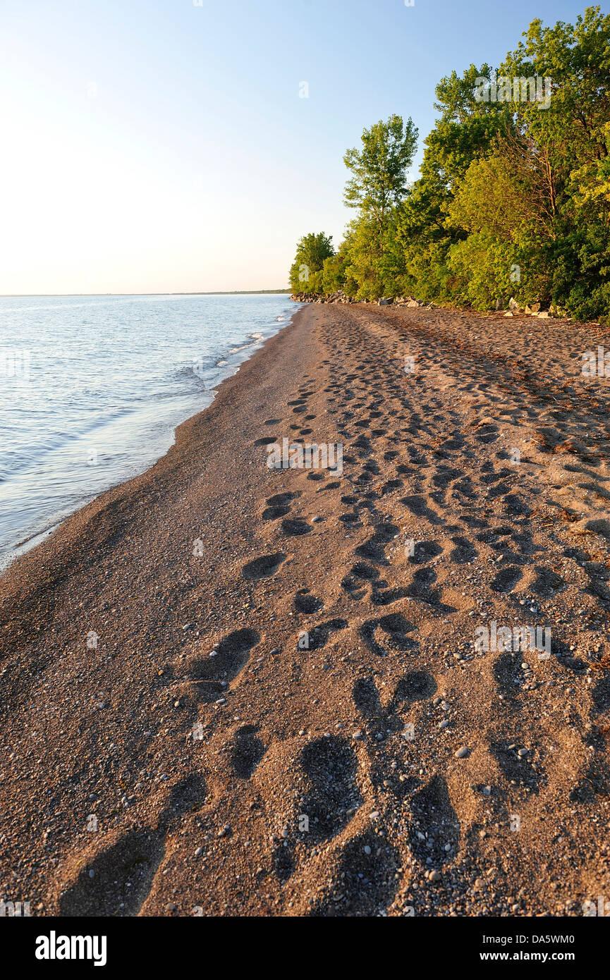 Canada, Lake Erie, lake, Leamington, Ontario, Point Pelee, National Park, Travel, beach, day, daytime, footprints, - Stock Image