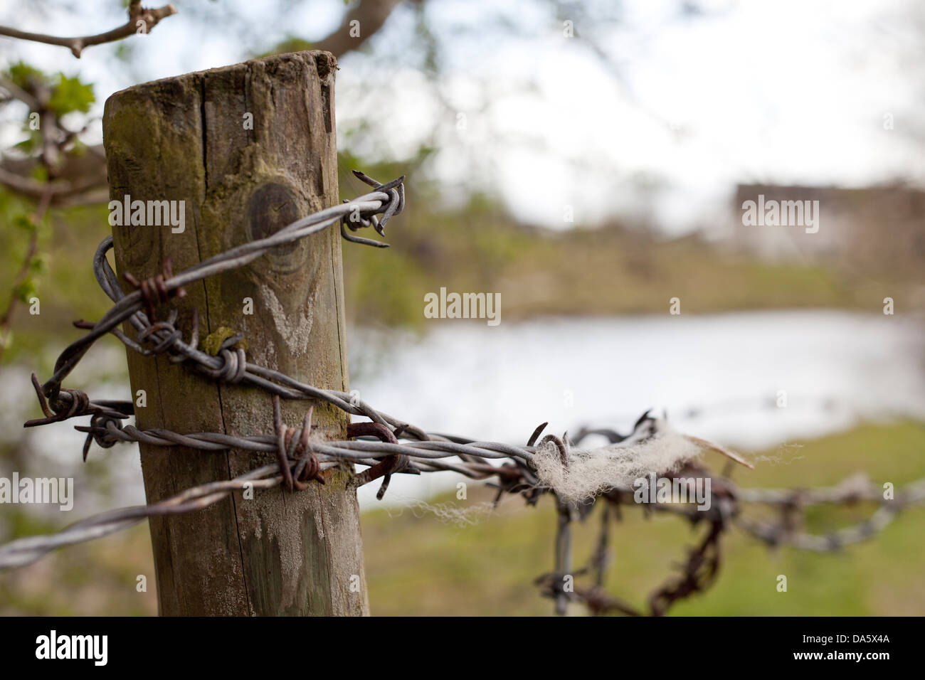 Close-up of a fence post wrapped in barbed wire. - Stock Image