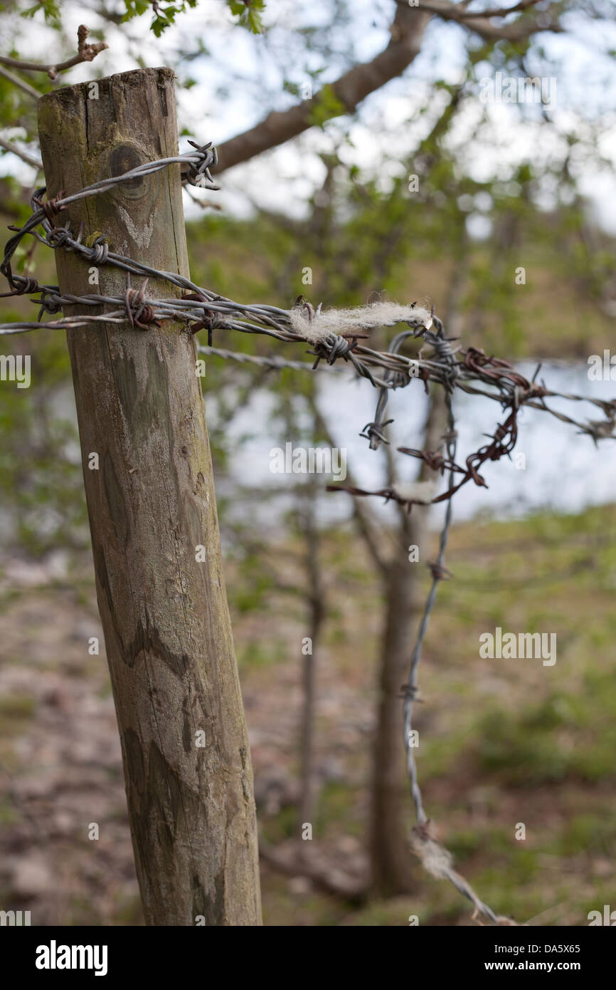 Sheeps wool caught on a barbed wire fence and fence post. - Stock Image