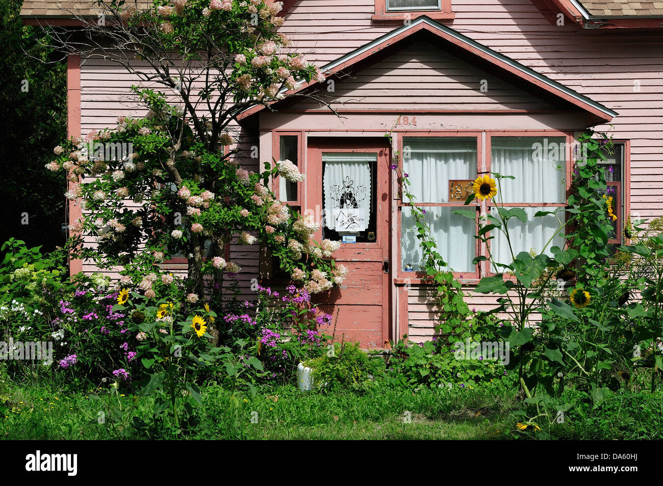 Canada, Garden, Quebec, Stanbridge East, faded, flowers, home, horizontal, house, pink, summer, sun flower, sunny, - Stock Image