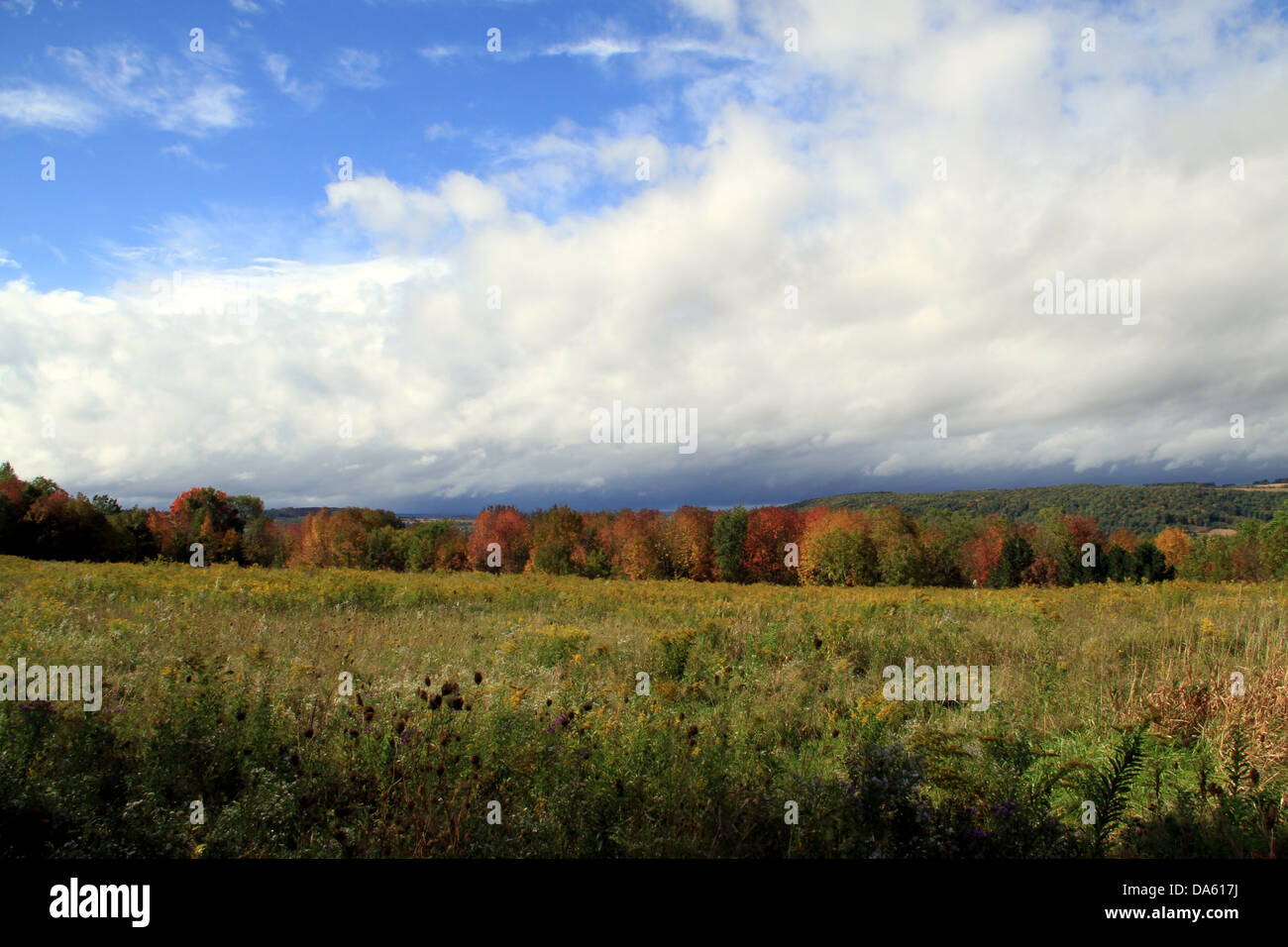 Fall Field - Stock Image