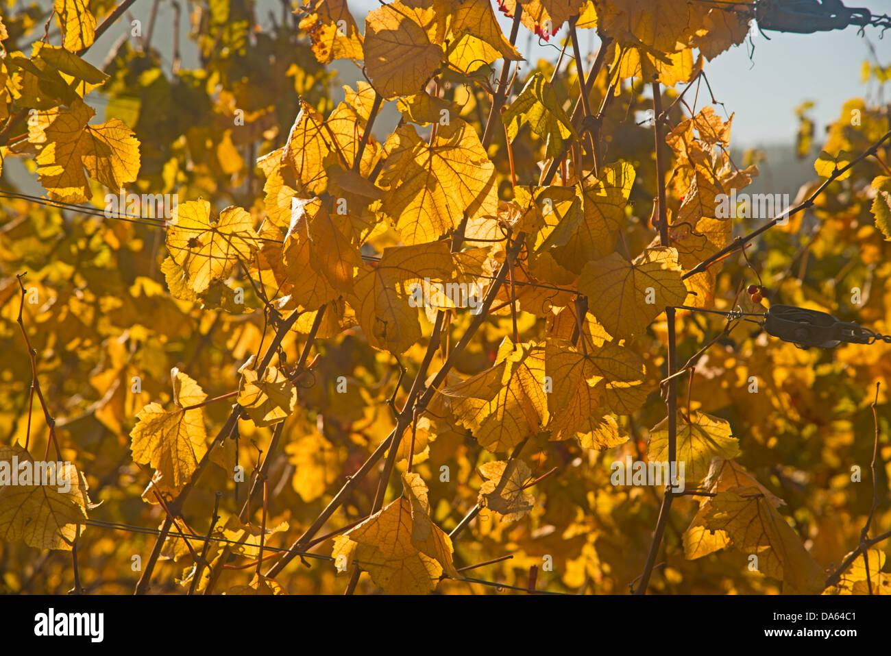 Wine village, Dernau, Ahr, vineyards, Ahrtal, red wine, late Burgundian, Portugieser, wine, wine-growing, Eifel, Stock Photo