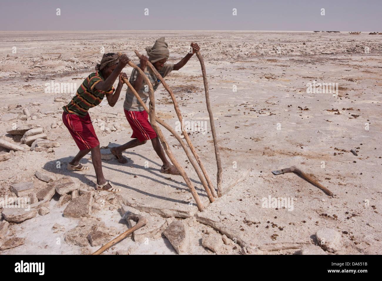 salt mining, Dallol, Danakil, Africa, traffic, transport, salt, saltwork, salt mining, Assale, salt lake, men, workers, - Stock Image