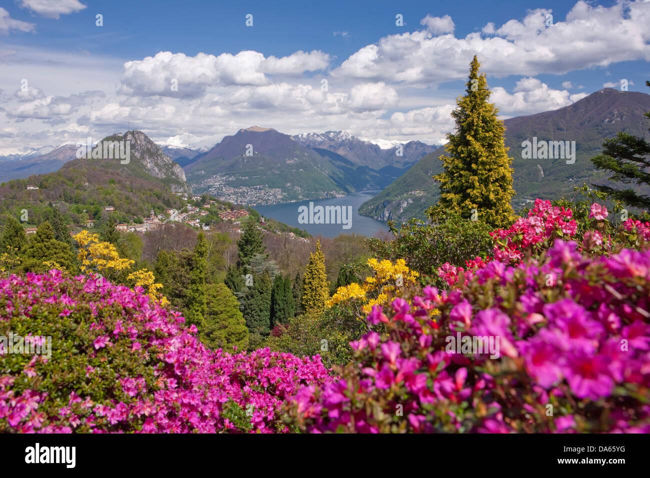 blossom, rhododendron, Parco San Grato, Carona, canton, TI, Ticino, South Switzerland, flower, flowers, park, Switzerland, - Stock Image