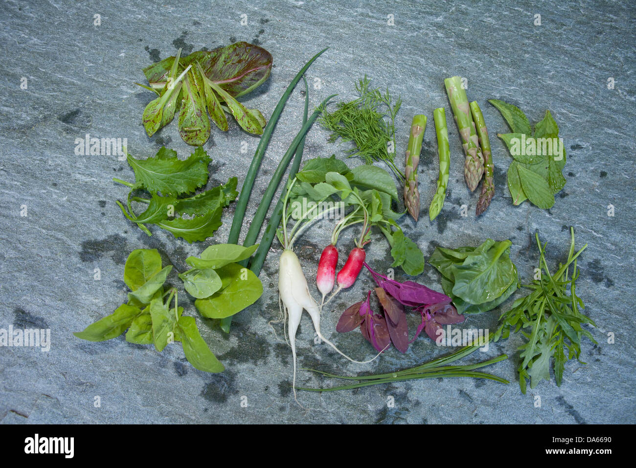 Vegetables, salads, lettuces, Hospezi, Trun, agriculture, canton, GR, Graubünden, Grisons, Switzerland, Europe, - Stock Image