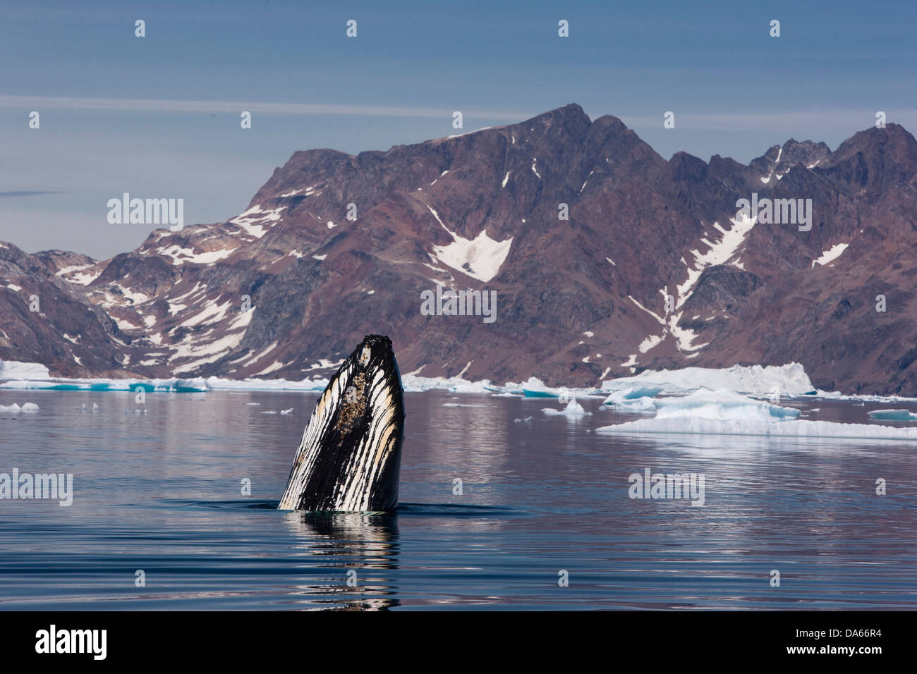 Whale watching, whale observation, humpback whale, Greenland, East Greenland, whale, whales, icebergs - Stock Image