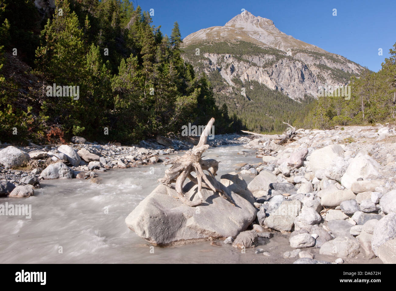 National park, Ofenpass, nature, Il Fuorn, wood, forest, canton, GR, Graubünden, Grisons, Switzerland, Europe, - Stock Image