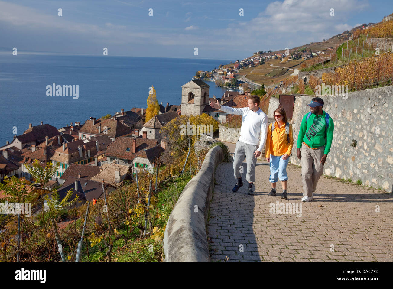 Traveller, Saint Saphorin, Lavaux, autumn, Castle, lake, lakes, canton, VD, Vaud, Lac Leman, wine, shoots, wine, - Stock Image