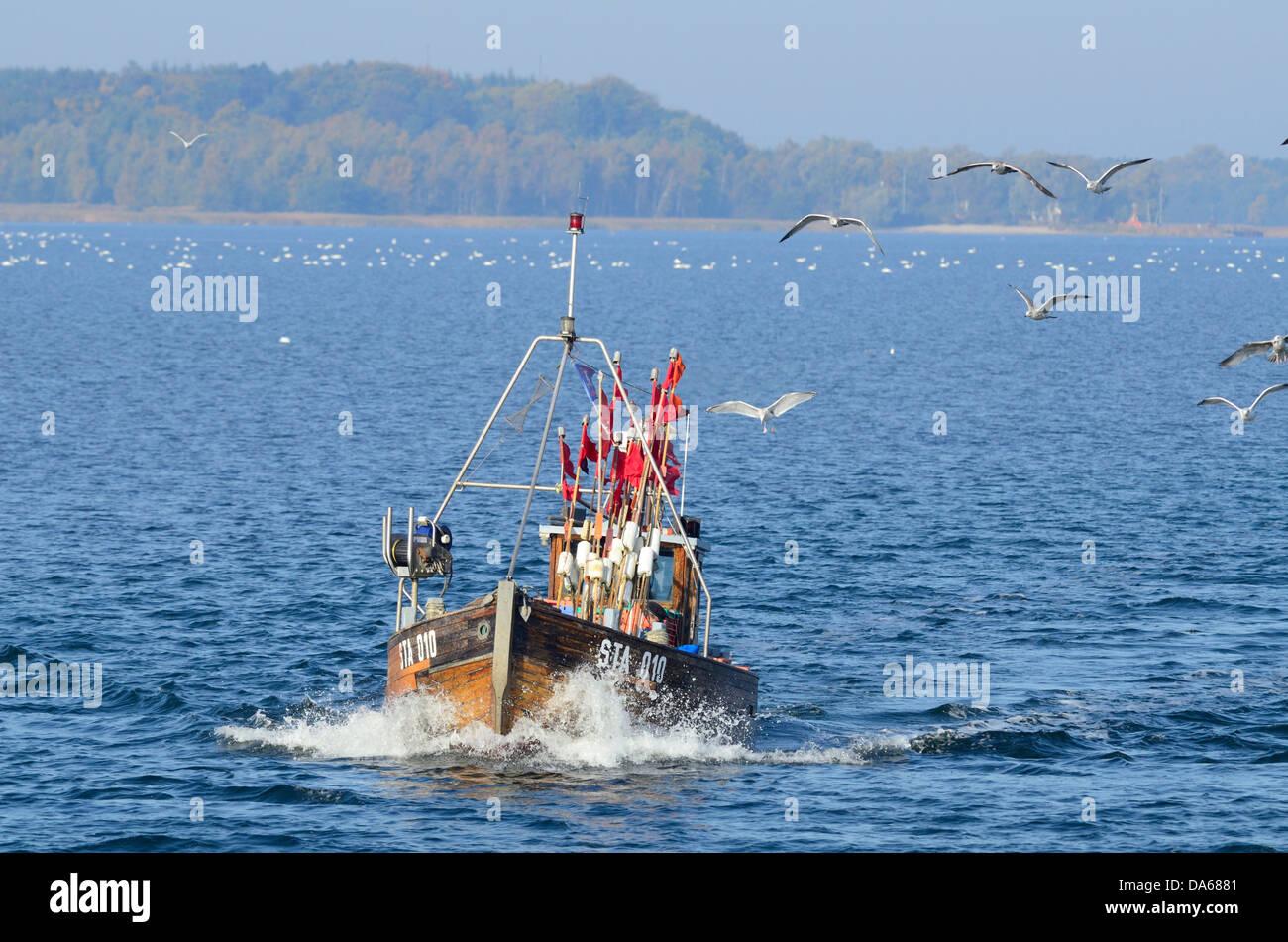 Fishing smack, fishery, gulls, Grabow, Zingst, Mecklenburg-Vorpommern, Germany - Stock Image