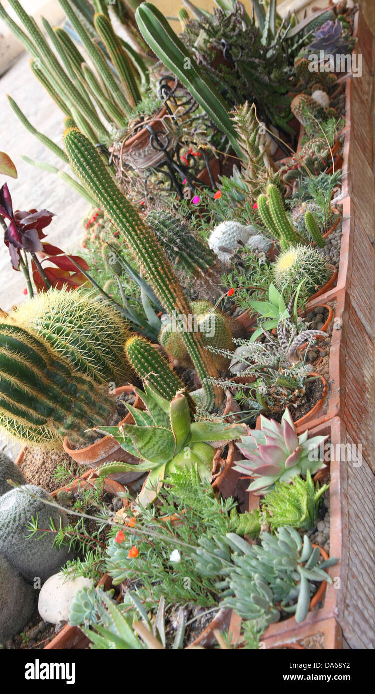 mix of many succulents and cactus with very sharp prickles and thorns of the cactus desert plants - Stock Image