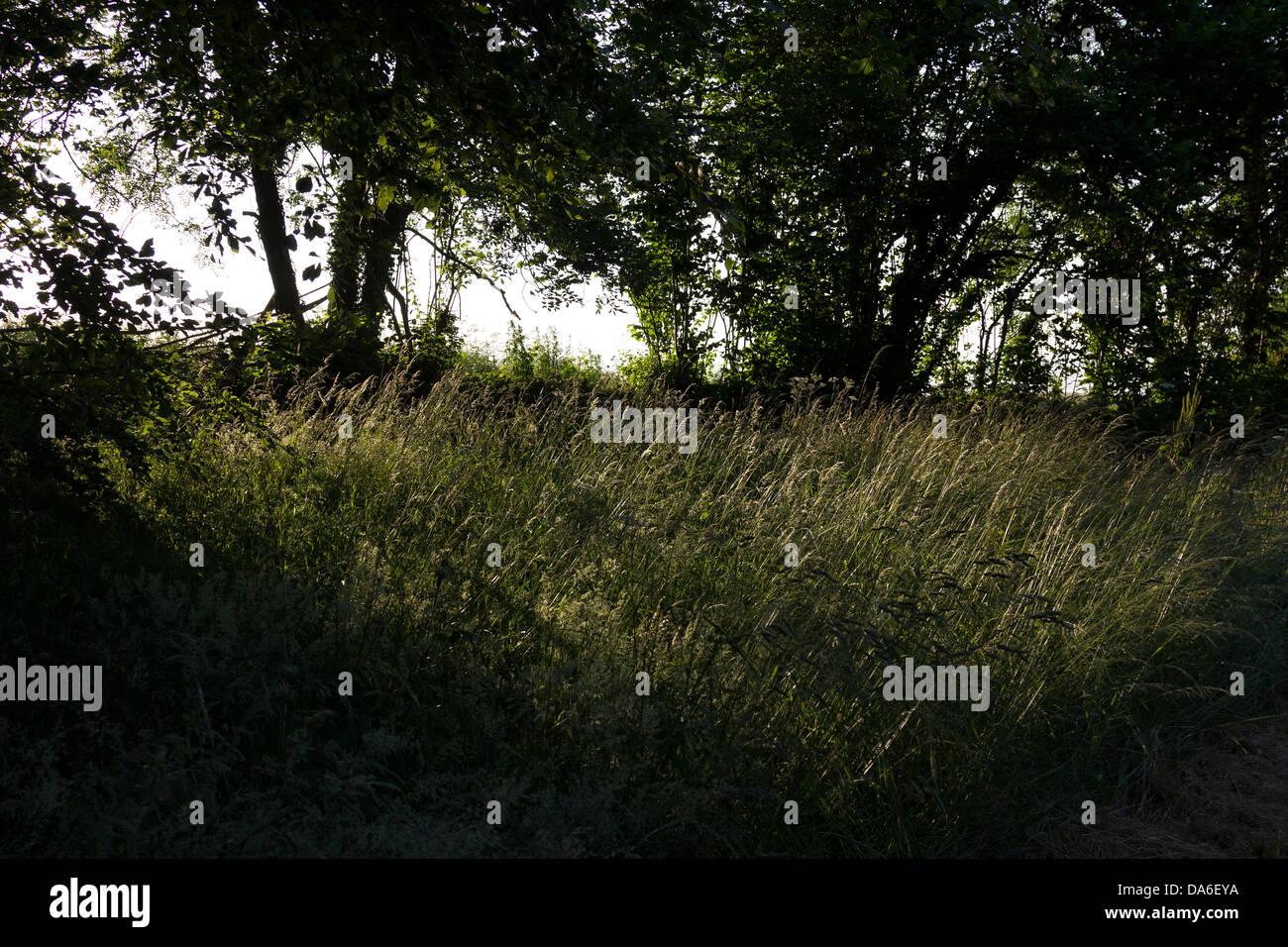 Farming in Devon,defra,the environment, rural development, the countryside, wildlife, animal welfare barn, farm, - Stock Image