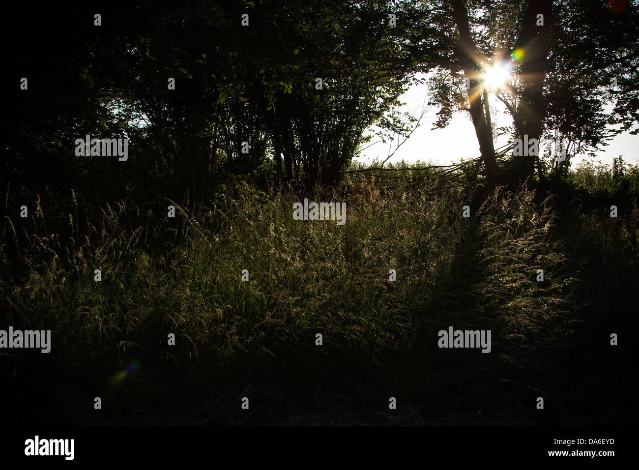sunset,Farming in Devon,defra,the environment, rural development, the countryside, wildlife, animal welfare barn, - Stock Image