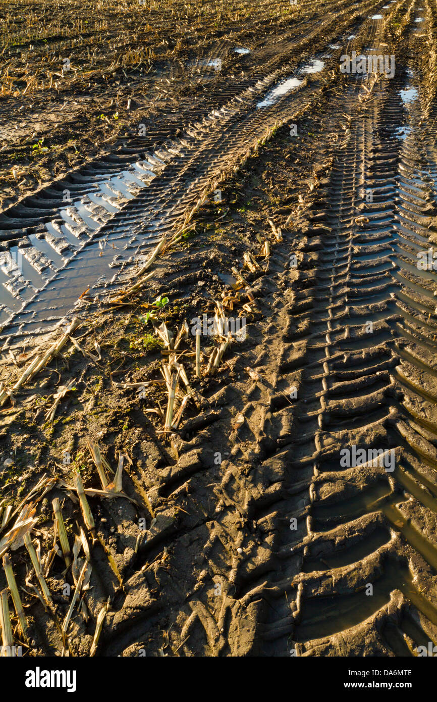 Tyre tracks in mud. The effects of the use of agricultural machinery on farmland during harvesting, England, UK - Stock Image