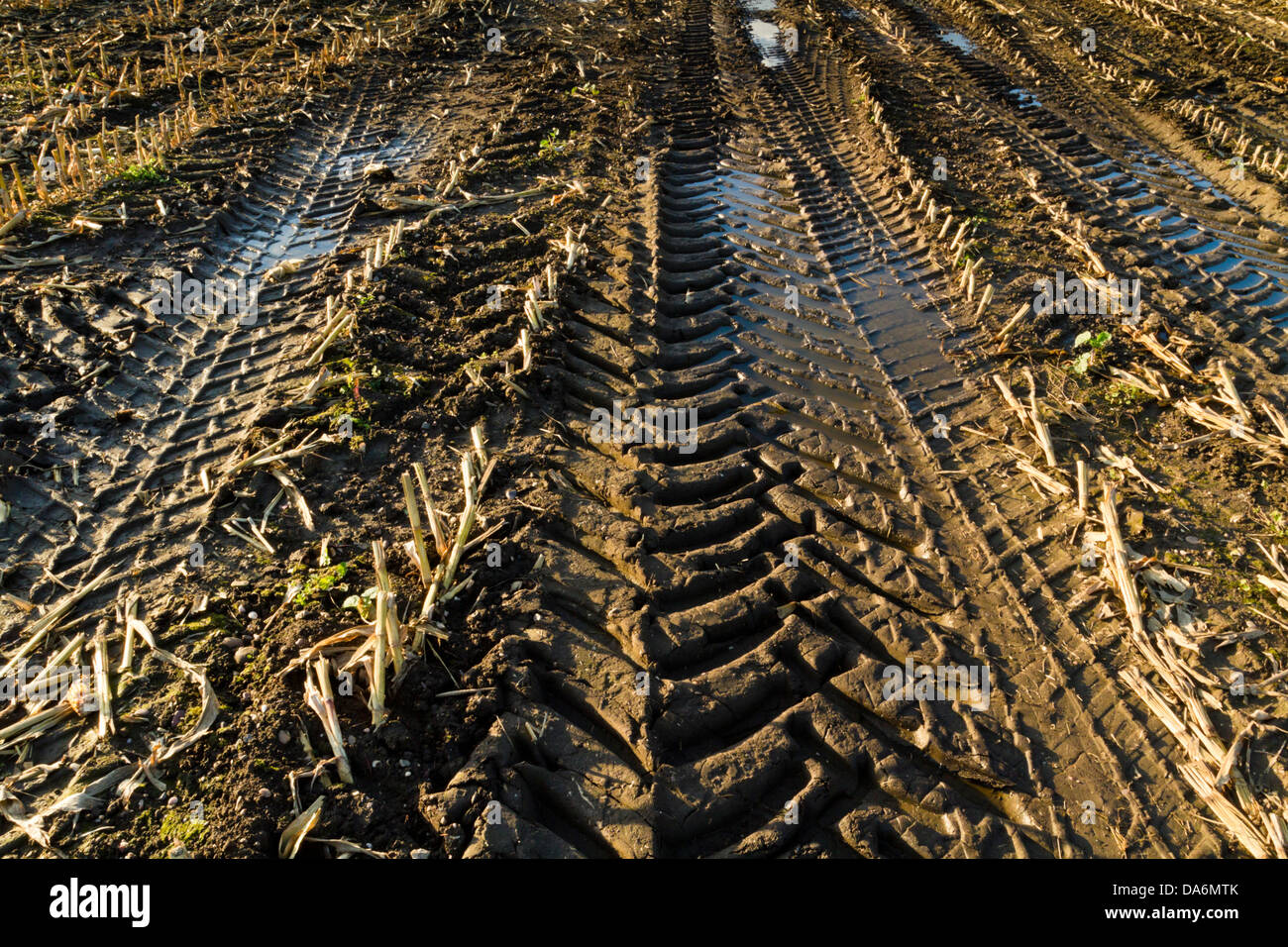 Tyre tracks on muddy land cause by the effects of using agricultural machinery on farmland during the harvesting - Stock Image