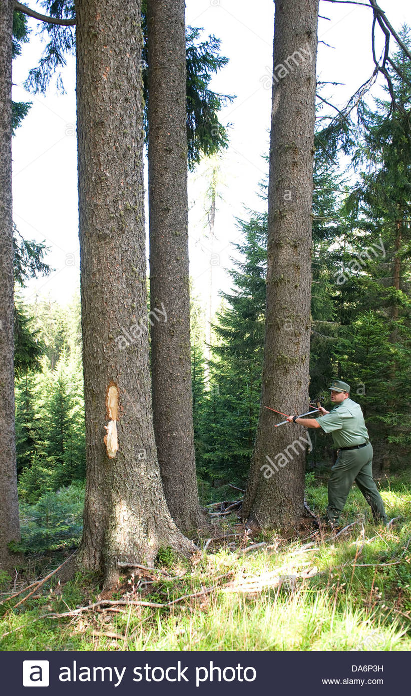 forestry,South Tyrol - Stock Image