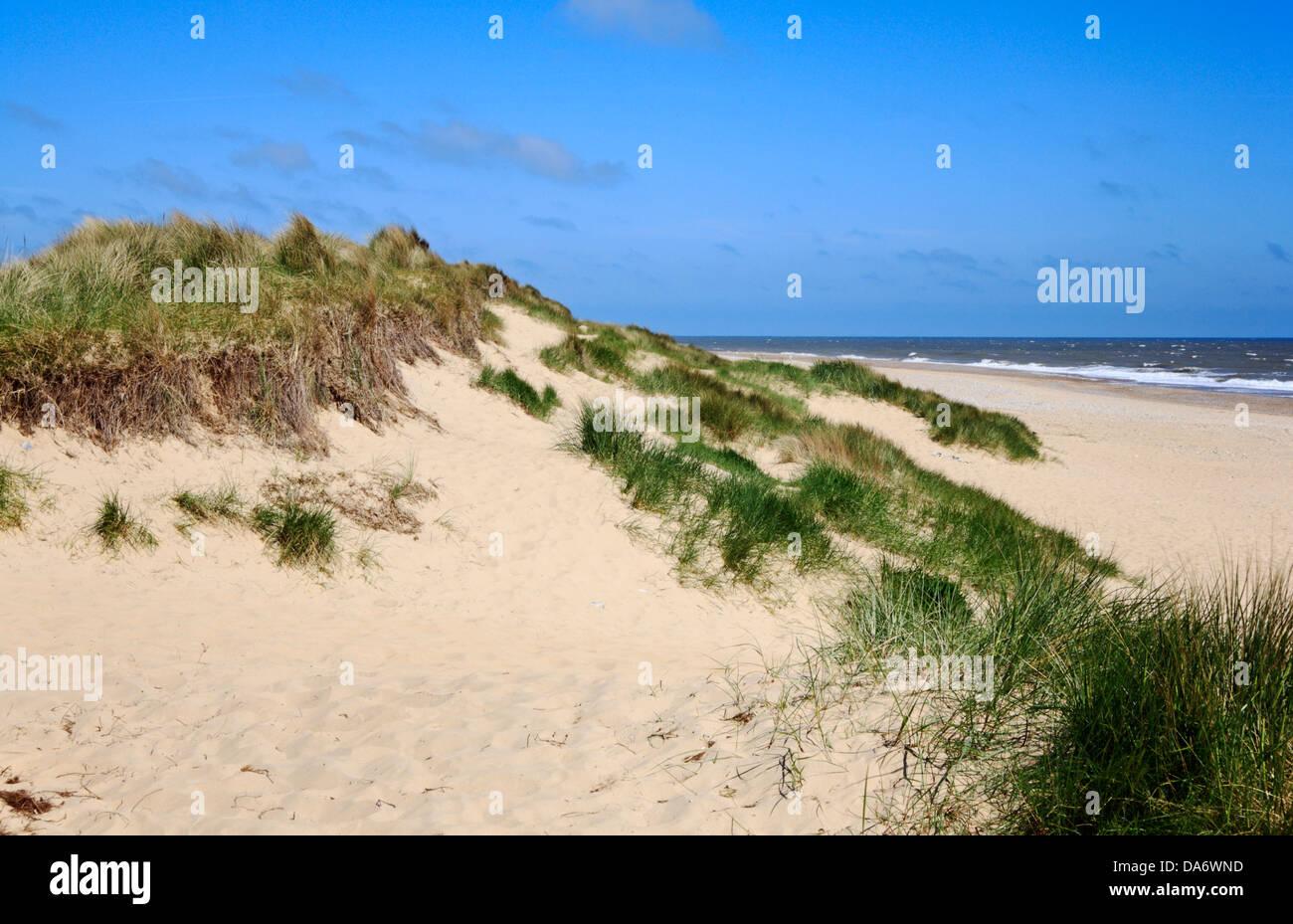 Winterton Beach Dog Walking