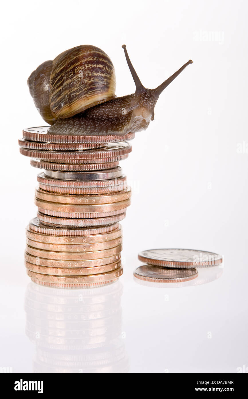 Funny snail sitting on a stack of dollar coins - Stock Image