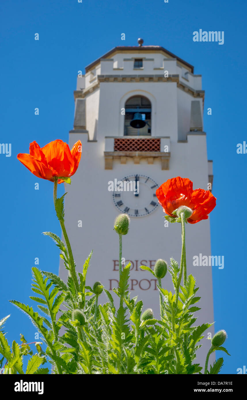 Orange Poppies and train depot against a beep blue sky - Stock Image