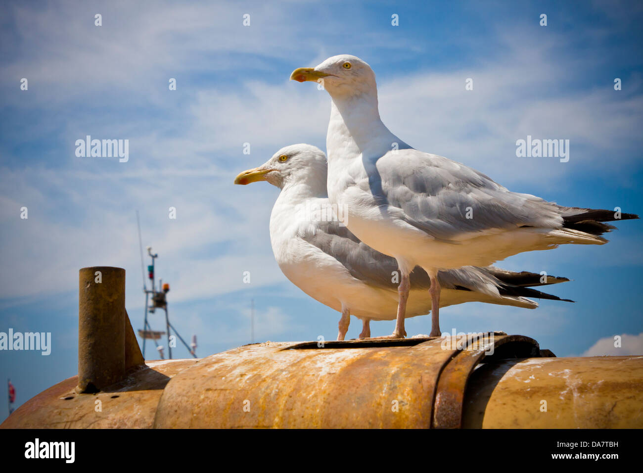 Two Herring Gulls standing on top of an industrial plant machine used to haul trawlers into the sea at Hastings - Stock Image