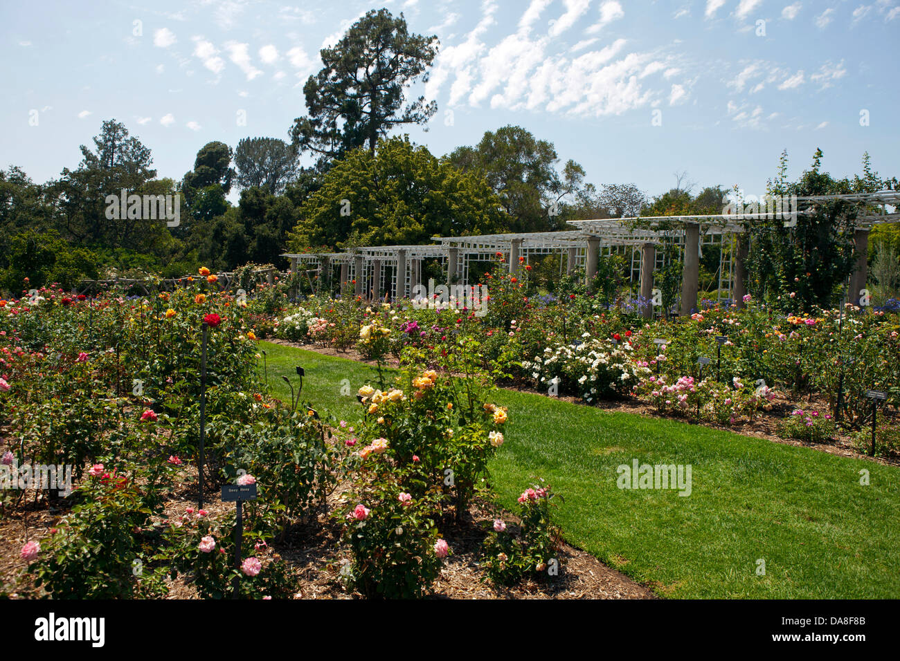 General View Of The Rose Garden The Huntington Library Art Stock Photo Alamy