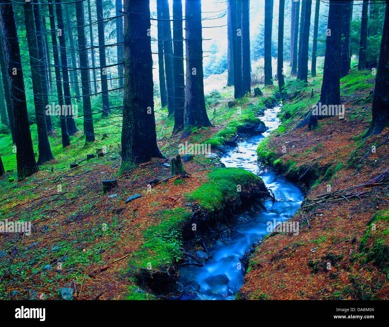 Austria, Europe, Tyrol, Sistrans, wood, forest, spruces, spruce forest, trees, water, little brooks, brook, flowing, - Stock Image