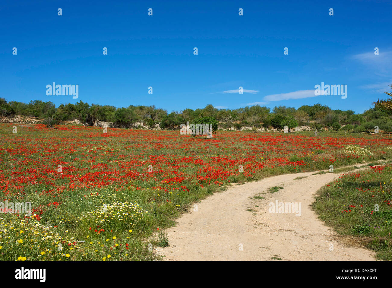 Balearic Islands, Majorca, Mallorca, Spain, Europe, outside, Finca, Fincas, country house, country houses, poppy - Stock Image