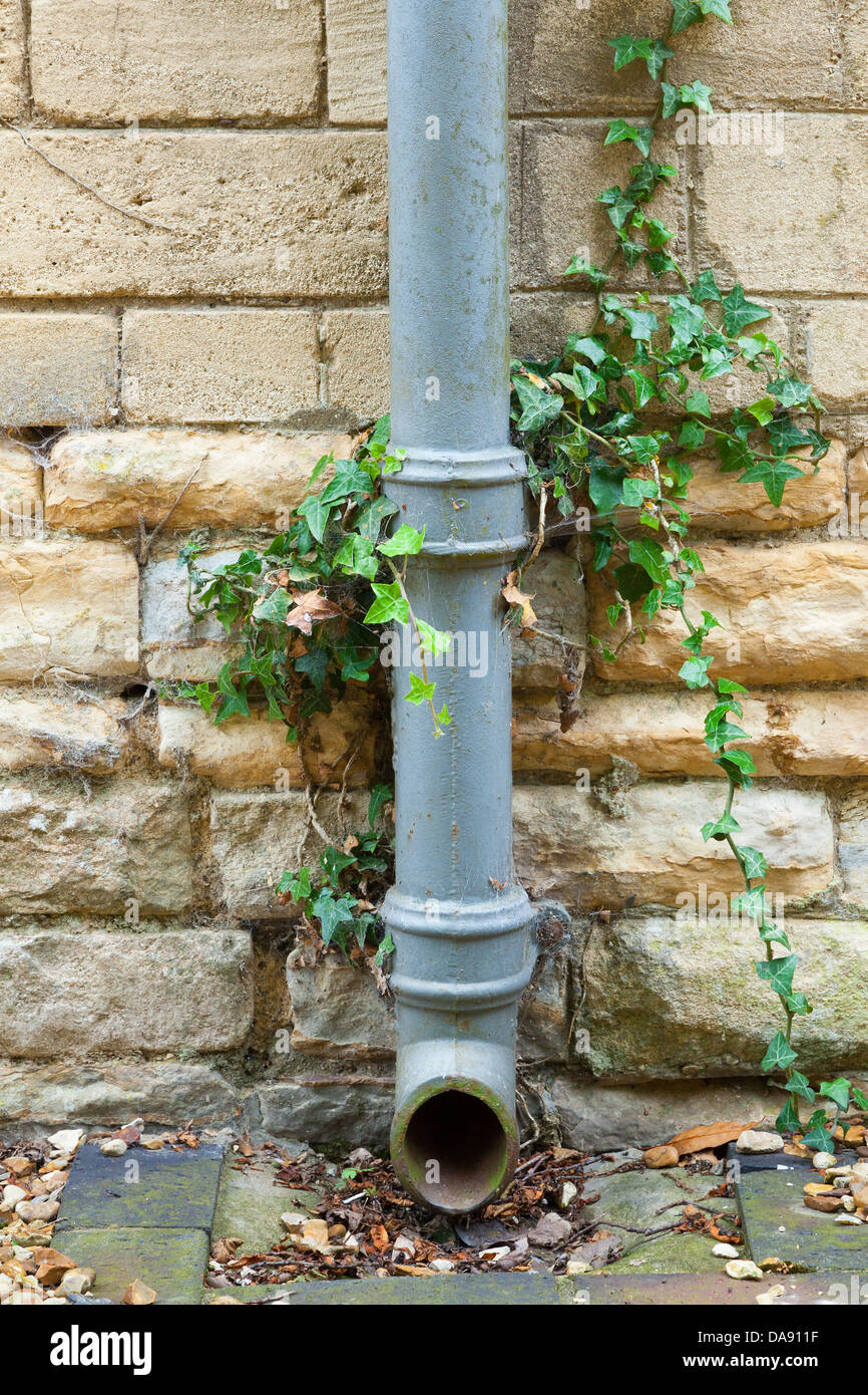 Cast iron drainpipe against a limestone wall with ivy growing up. - Stock Image