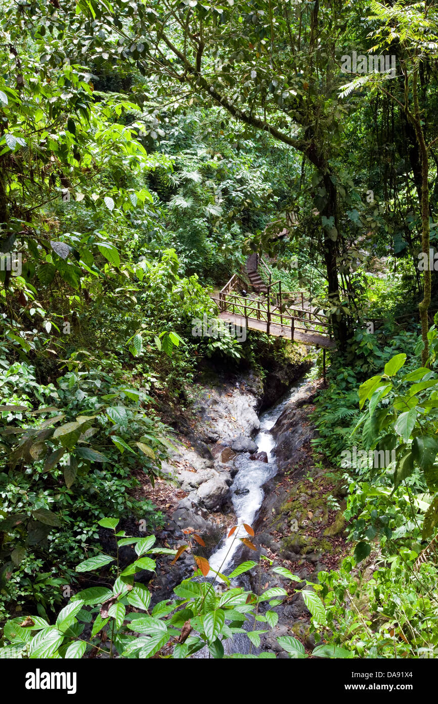 Trail running through the Rainmaker Conservation Project, Costa Rica - Stock Image