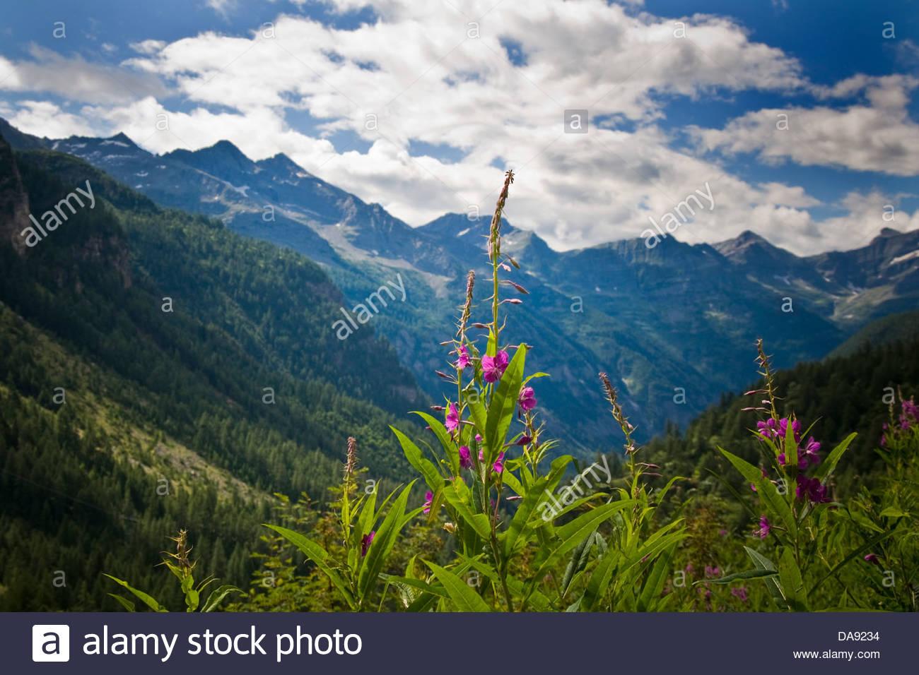 Italy,Piedmont,Formazza valley,landscape - Stock Image